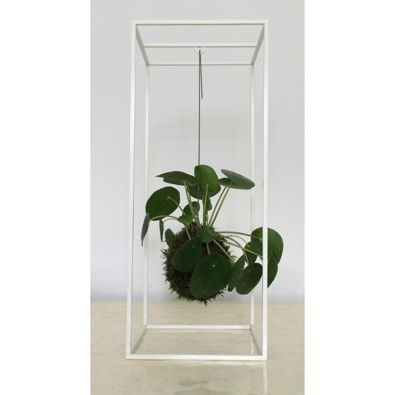 kokedama pilea peperomioides. Black Bedroom Furniture Sets. Home Design Ideas