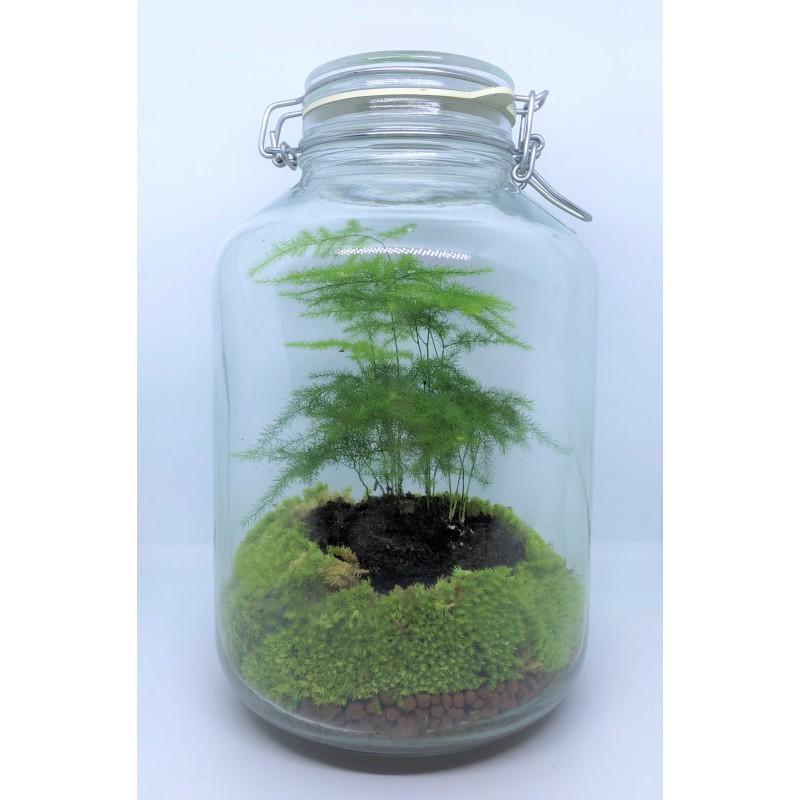 Terrarium Asparagus In A Jar