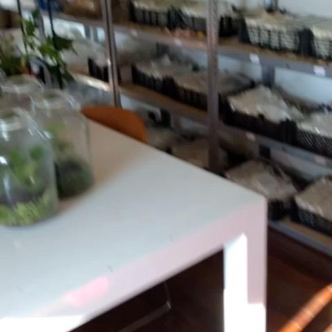 Showroom 's ready!#gogreen #terrarium #kokedama #driedflowers #visitonappointment #coronaproof