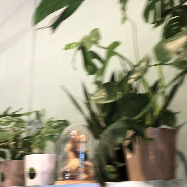 Hurry to @popandshopbrussels for some new greens#reassort #monstera #kokedama #terrarium #faitesvousplaisir