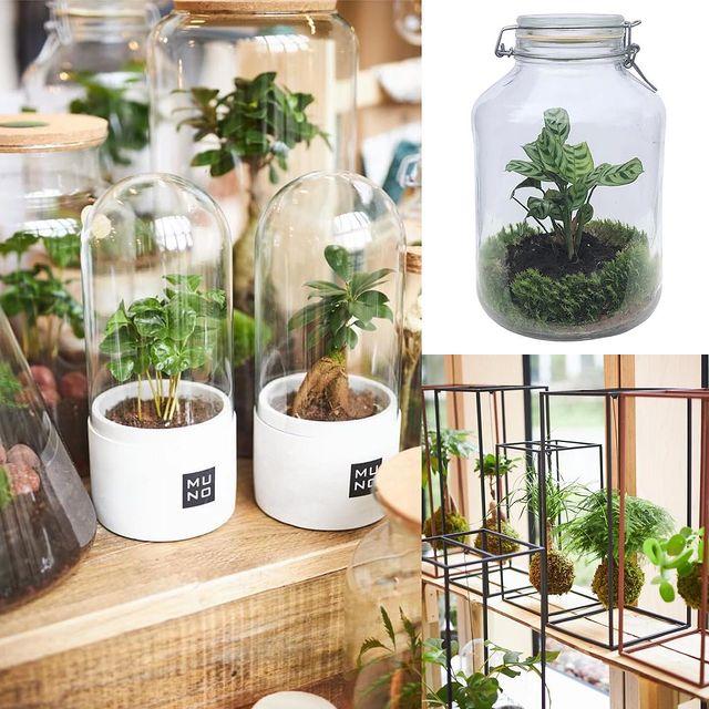 Geef groen!Give green! Offrez vert!Onze huisgemaakte terraria behoeven geen onderhoudOur homemade terraria require no ma