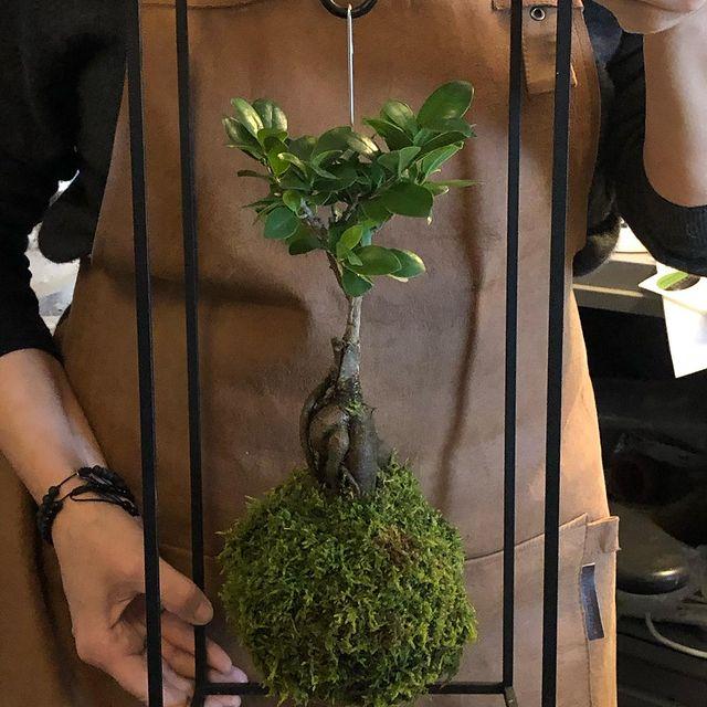 Like this beauty?#kokedama #ficusginseng #gogreen #urbanjungle #plantsofinstagram #plantlove #plantsmakepeoplehappy