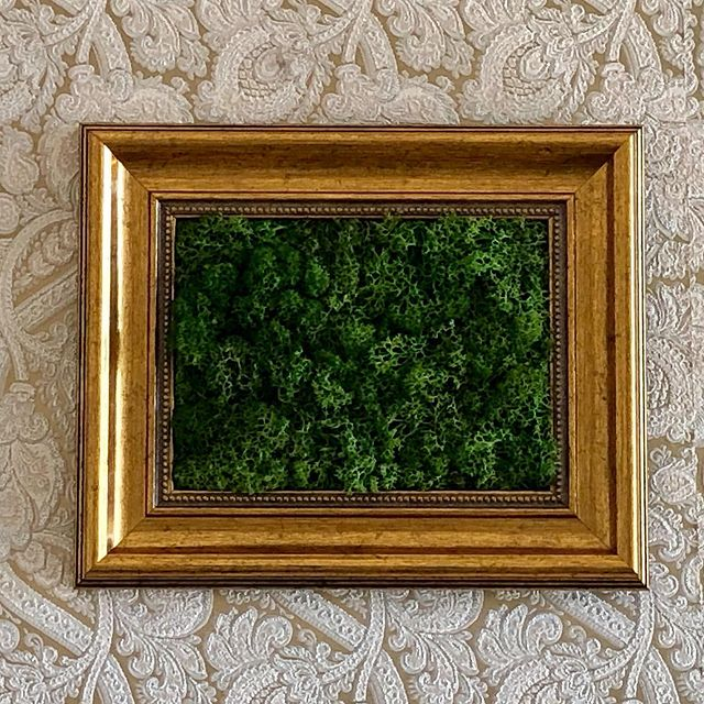 New New New So proud to present our stabilised moss baroque frames collection! #moss #mossinteriors #frame #stabilisedmo