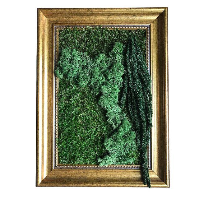 Stabilized moss & plants frame #moss #mossart #mossinteriors #frame #urbanjungle #gogreen #amaranth