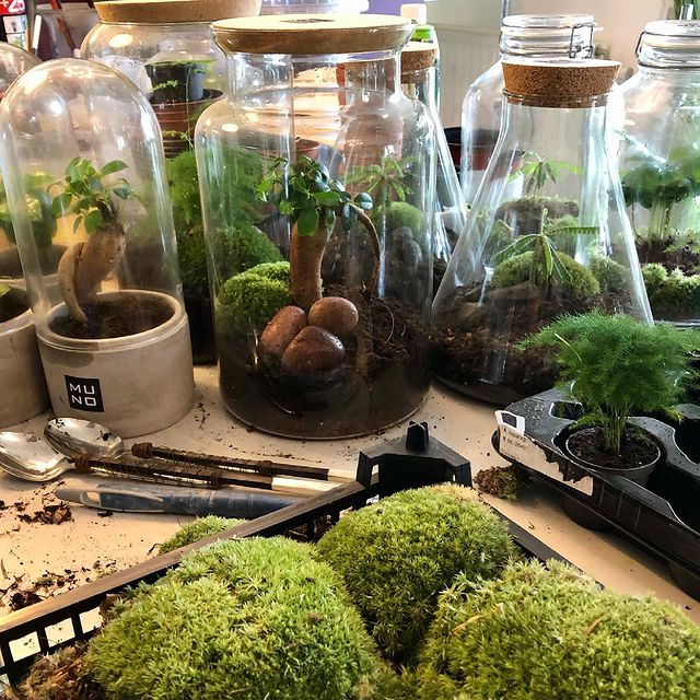 Been busy today#terrarium #madeinbelgium #madewithlove #ficusginseng #asparagusplumosus #biophytumsensitivum #moss